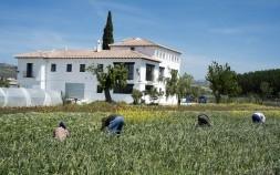 finca-agricultura-fundación-empresa-y-juventud